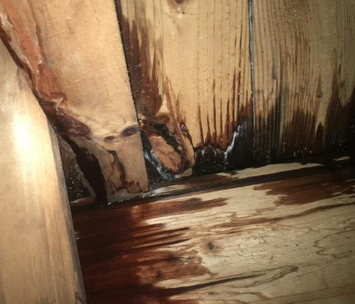 Crawl Space with Mold Before