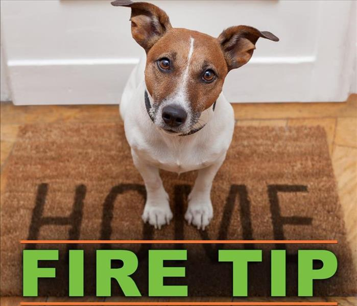 Fire Damage 3 Tips for Protecting Pets During a Fire