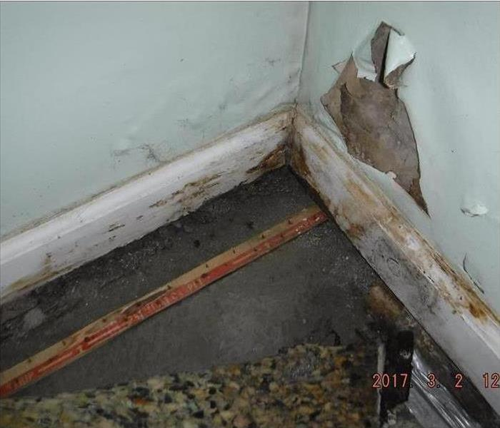 Mold Remediation Does Homeowners Insurance Cover Mold Damage?
